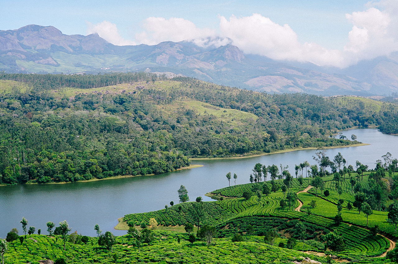 Munnar tea fields, Kerala, India