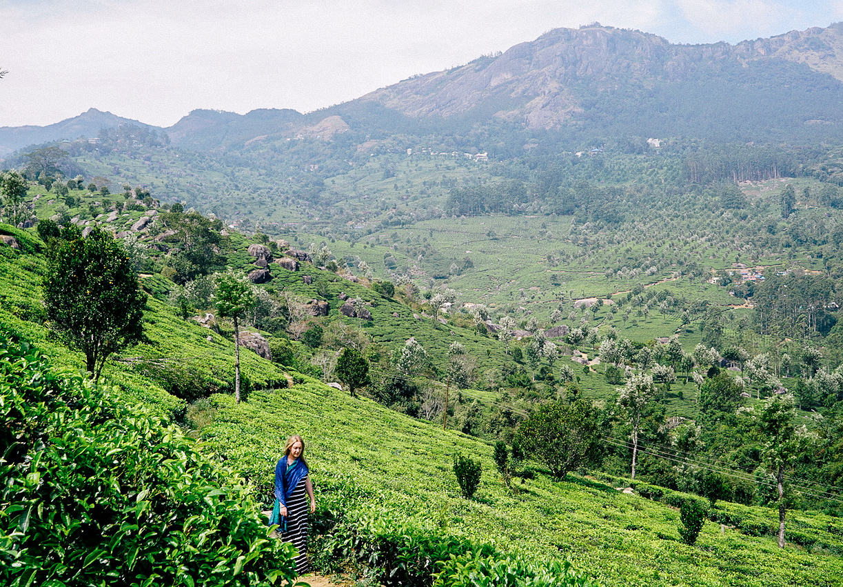 Munnar tea tour - Kerala, India
