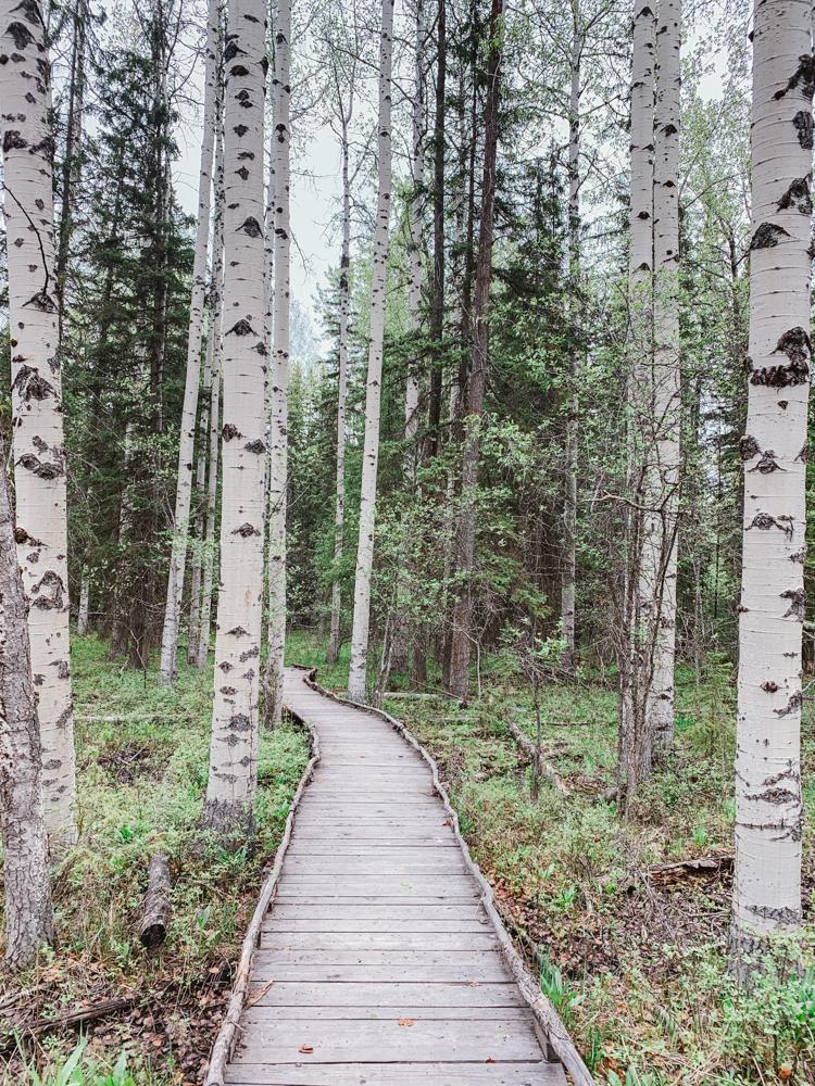 Viking Creek Nature Trail path